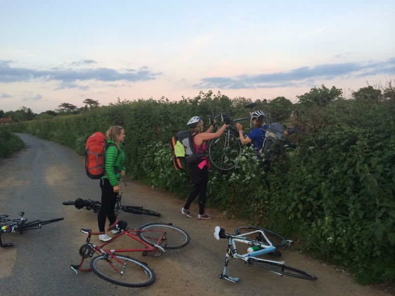bikes through hedge